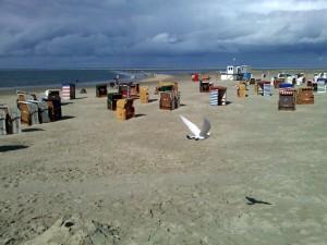 Strandmöwe auf Borkum.